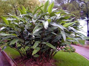 Shellplant