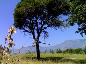 Mauritanian Grass