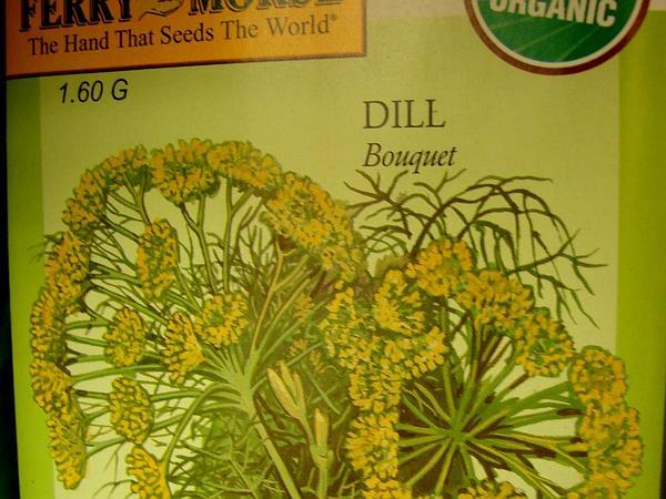Dill (Anethum Graveolens) https://www.sagebud.com/dill-anethum-graveolens