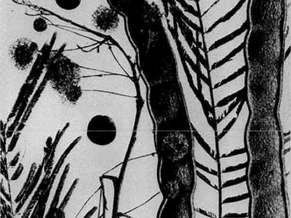 Cohoba Tree (Anadenanthera Peregrina) https://www.sagebud.com/cohoba-tree-anadenanthera-peregrina