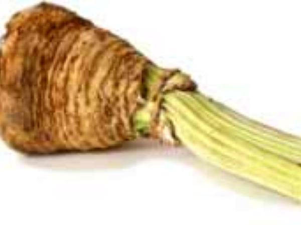 Celery (Apium) https://www.sagebud.com/celery-apium