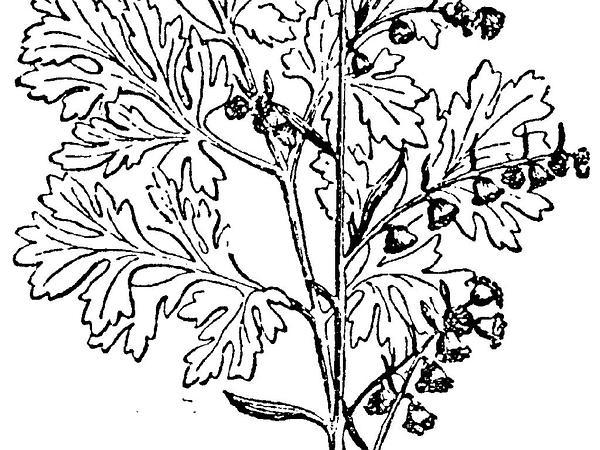 Sagebud Grow Your Garden Plant A Tree Pot A Flower
