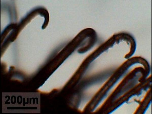Burdock (Arctium) https://www.sagebud.com/burdock-arctium/