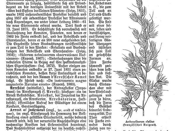 Tall Oatgrass (Arrhenatherum Elatius) https://www.sagebud.com/tall-oatgrass-arrhenatherum-elatius