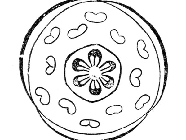 Wildginger (Asarum) https://www.sagebud.com/wildginger-asarum