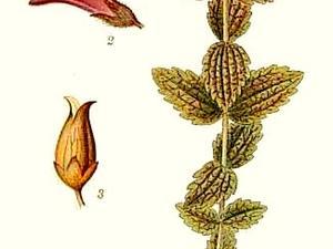 Velvetbells