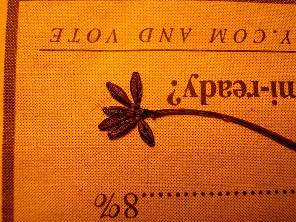 Anena (Boerhavia Repens) https://www.sagebud.com/anena-boerhavia-repens