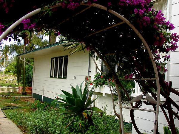 Great Bougainvillea (Bougainvillea Spectabilis) https://www.sagebud.com/great-bougainvillea-bougainvillea-spectabilis