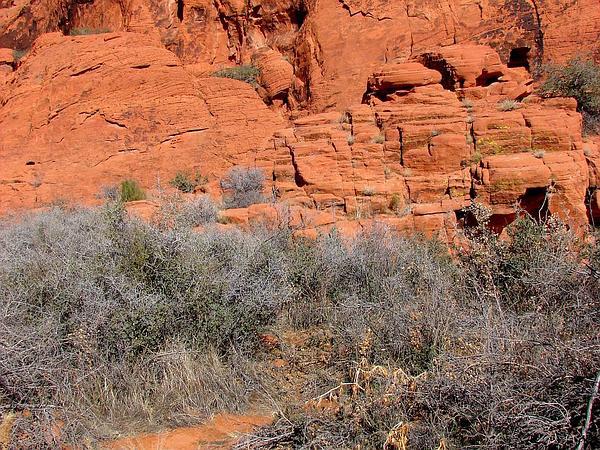 Red Brome (Bromus Rubens) https://www.sagebud.com/red-brome-bromus-rubens