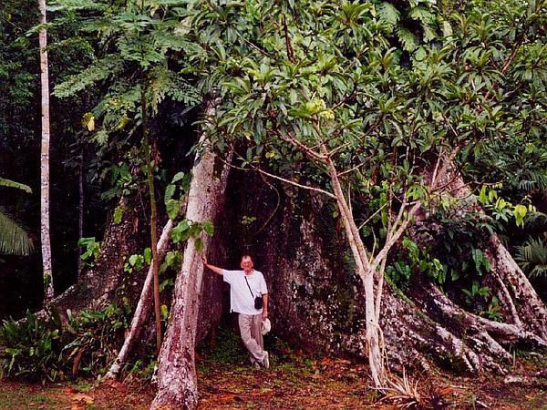 Ceiba (Ceiba) https://www.sagebud.com/ceiba-ceiba