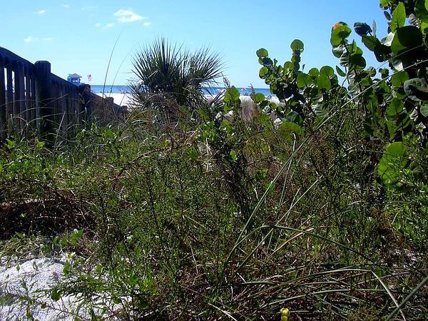 Mexican Tea (Chenopodium Ambrosioides) https://www.sagebud.com/mexican-tea-chenopodium-ambrosioides