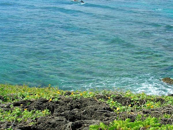 Beach Sandmat (Chamaesyce Degeneri) https://www.sagebud.com/beach-sandmat-chamaesyce-degeneri