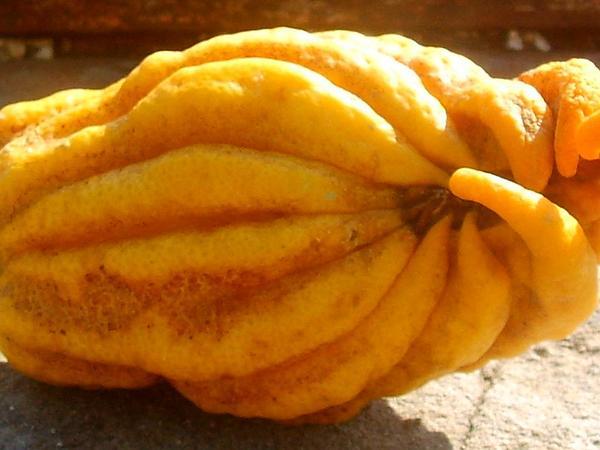 Citron (Citrus Medica) https://www.sagebud.com/citron-citrus-medica