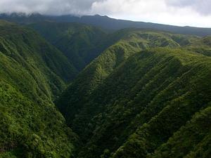 'Oha Wai Nui