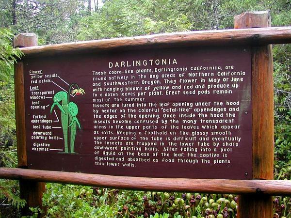 California Pitcherplant (Darlingtonia) https://www.sagebud.com/california-pitcherplant-darlingtonia