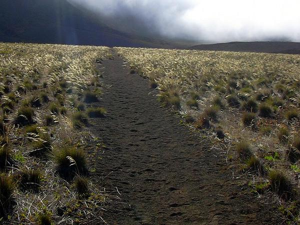 Alpine Hairgrass (Deschampsia Nubigena) https://www.sagebud.com/alpine-hairgrass-deschampsia-nubigena/