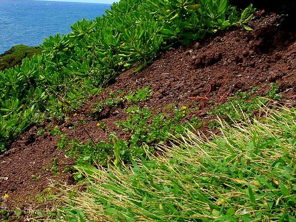 Crabgrass (Digitaria) https://www.sagebud.com/crabgrass-digitaria