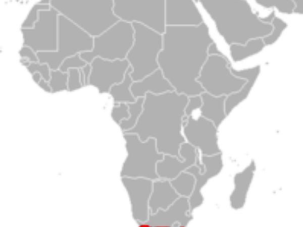 Cape Sundew (Drosera Capensis) https://www.sagebud.com/cape-sundew-drosera-capensis