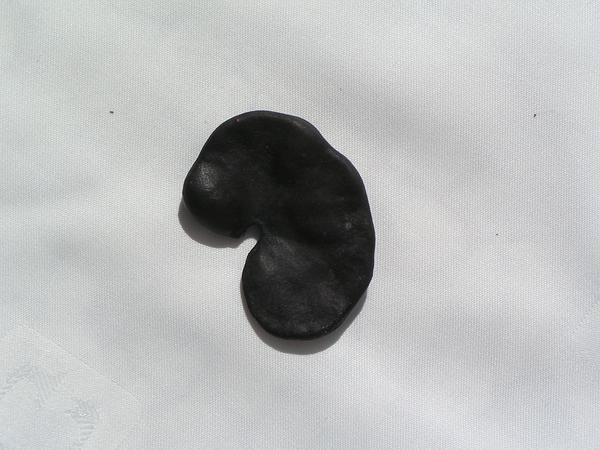Pacara Earpod Tree (Enterolobium Contortisiliquum) https://www.sagebud.com/pacara-earpod-tree-enterolobium-contortisiliquum