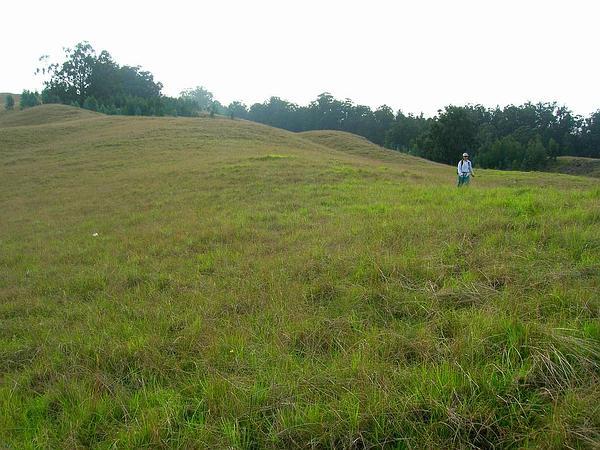 Southern Mahogany (Eucalyptus Botryoides) https://www.sagebud.com/southern-mahogany-eucalyptus-botryoides/