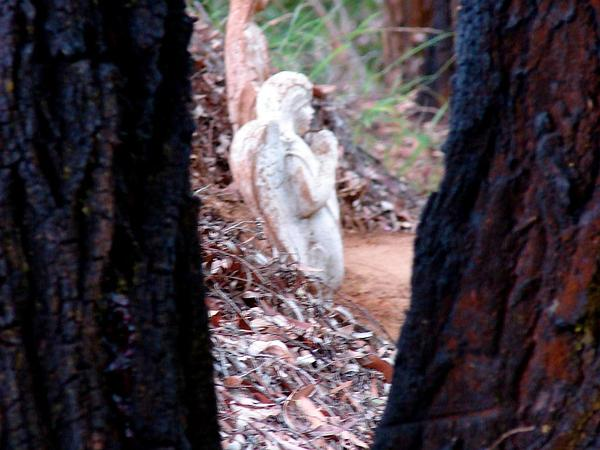 Red Ironbark (Eucalyptus Sideroxylon) https://www.sagebud.com/red-ironbark-eucalyptus-sideroxylon