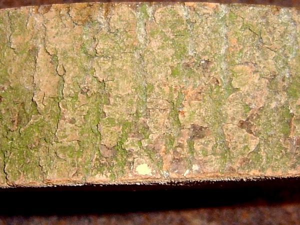 European Ash (Fraxinus Excelsior) https://www.sagebud.com/european-ash-fraxinus-excelsior