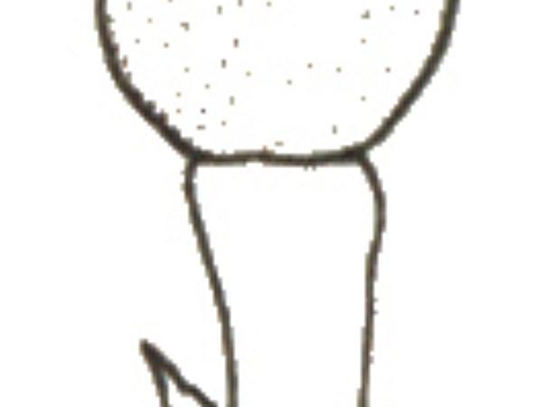 Fumitory (Fumaria) https://www.sagebud.com/fumitory-fumaria
