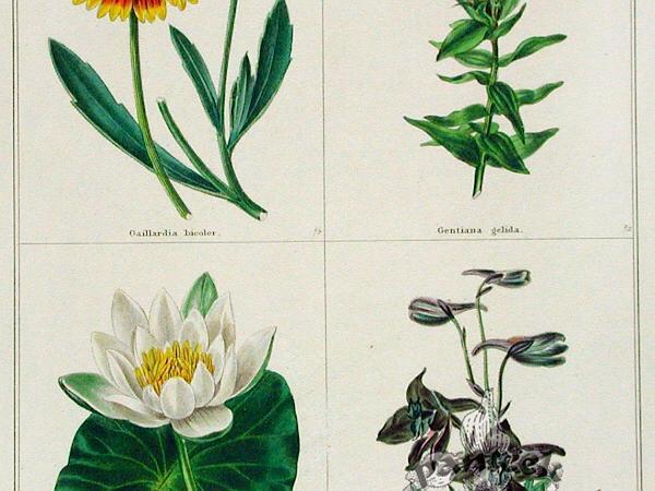 Blanketflower (Gaillardia) https://www.sagebud.com/blanketflower-gaillardia