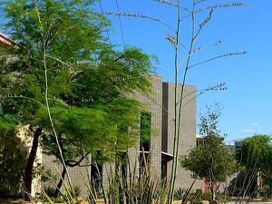 New Mexico False Yucca