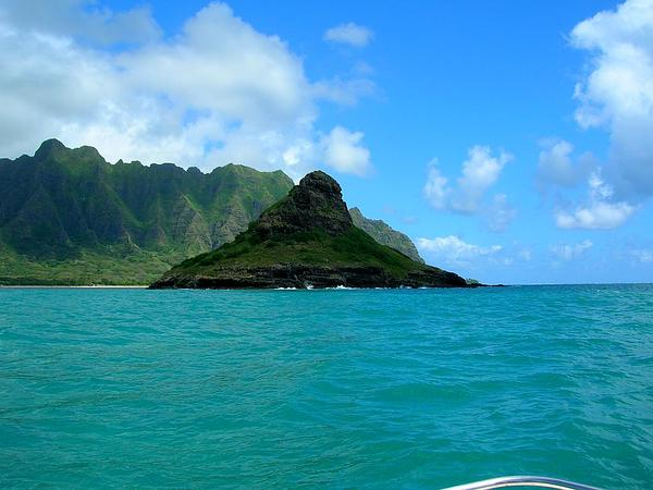 Oceanblue Morning-Glory (Ipomoea Indica) https://www.sagebud.com/oceanblue-morning-glory-ipomoea-indica