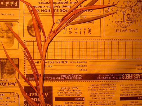 Murainagrass (Ischaemum) https://www.sagebud.com/murainagrass-ischaemum