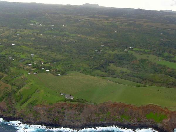 Spoonleaf Yellow Loosestrife (Lysimachia Mauritiana) https://www.sagebud.com/spoonleaf-yellow-loosestrife-lysimachia-mauritiana