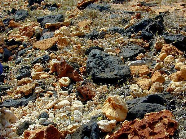 Hawai'I Desert-Thorn (Lycium Sandwicense) https://www.sagebud.com/hawaii-desert-thorn-lycium-sandwicense