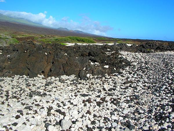 Hawai'I Desert-Thorn (Lycium Sandwicense) https://www.sagebud.com/hawaii-desert-thorn-lycium-sandwicense/