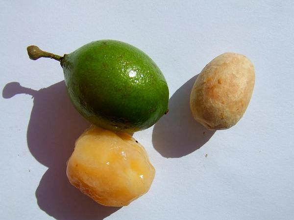 Spanish Lime (Melicoccus Bijugatus) https://www.sagebud.com/spanish-lime-melicoccus-bijugatus/