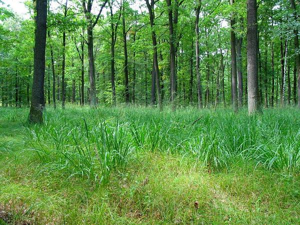 Moorgrass (Molinia) https://www.sagebud.com/moorgrass-molinia