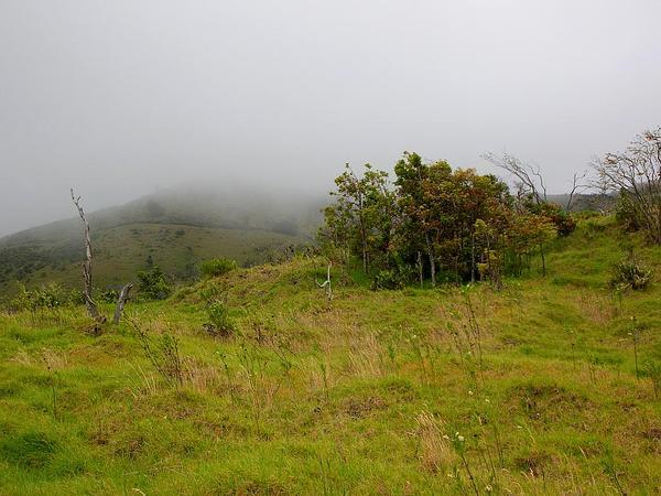 Lanai Colicwood (Myrsine Lanaiensis) https://www.sagebud.com/lanai-colicwood-myrsine-lanaiensis
