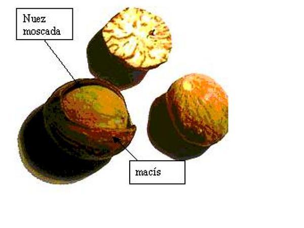 Nutmeg (Myristica) https://www.sagebud.com/nutmeg-myristica
