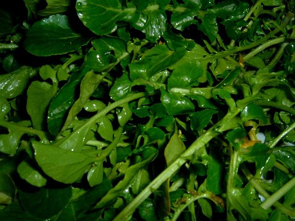 Watercress (Nasturtium Officinale) https://www.sagebud.com/watercress-nasturtium-officinale