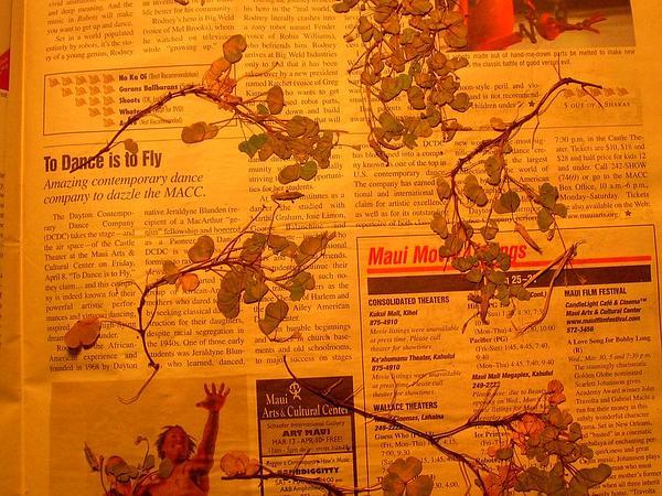 Creeping Woodsorrel (Oxalis Corniculata) https://www.sagebud.com/creeping-woodsorrel-oxalis-corniculata