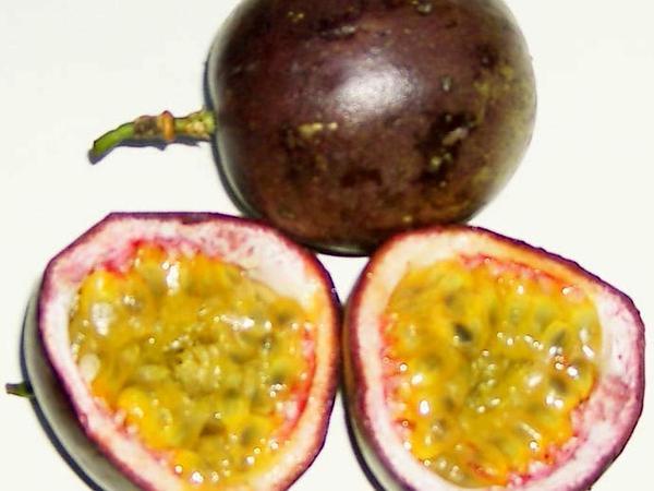 Purple Granadilla (Passiflora Edulis) https://www.sagebud.com/purple-granadilla-passiflora-edulis