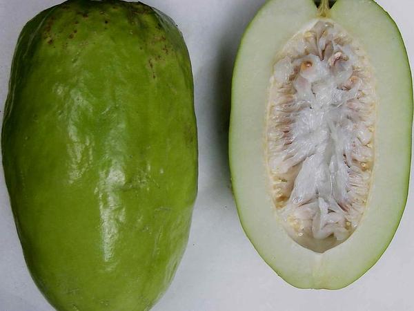 Giant Granadilla (Passiflora Quadrangularis) https://www.sagebud.com/giant-granadilla-passiflora-quadrangularis