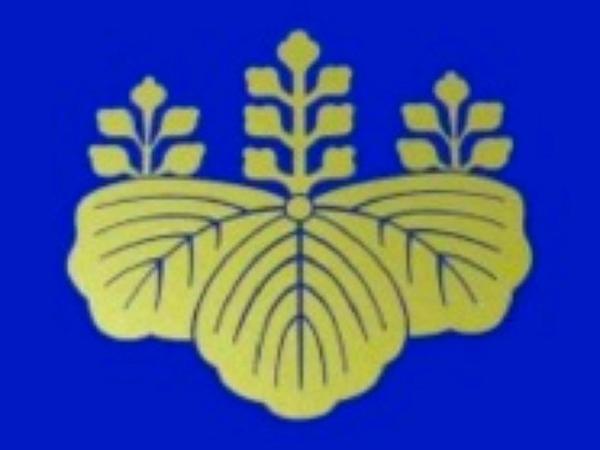 Paulownia (Paulownia) https://www.sagebud.com/paulownia-paulownia