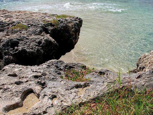 Seashore Paspalum (Paspalum Vaginatum) https://www.sagebud.com/seashore-paspalum-paspalum-vaginatum