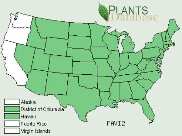 Switchgrass (Panicum Virgatum) https://www.sagebud.com/switchgrass-panicum-virgatum