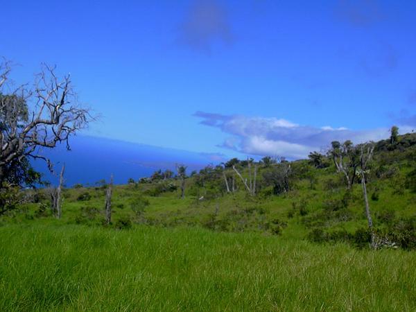 Kikuyugrass (Pennisetum Clandestinum) https://www.sagebud.com/kikuyugrass-pennisetum-clandestinum