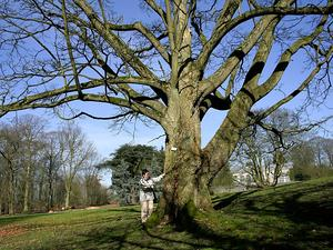 Corktree