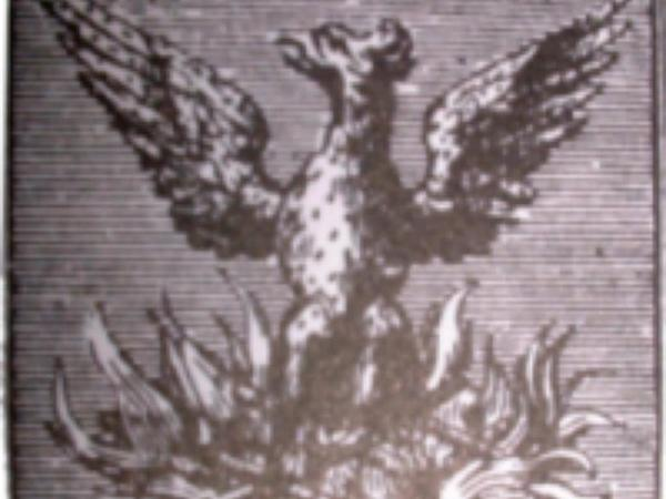 Date Palm (Phoenix) https://www.sagebud.com/date-palm-phoenix