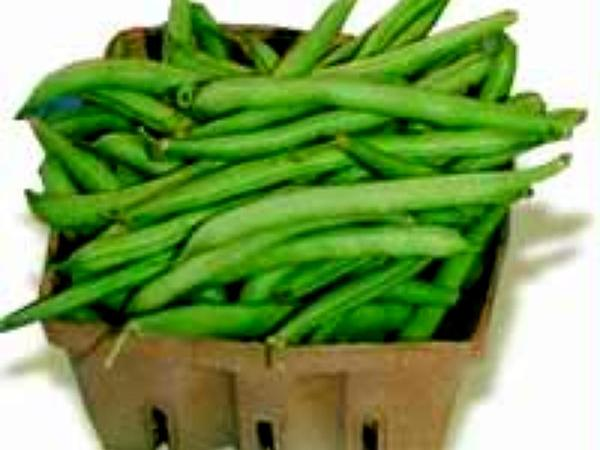 Kidney Bean (Phaseolus Vulgaris) https://www.sagebud.com/kidney-bean-phaseolus-vulgaris