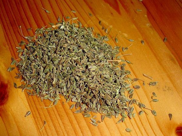 Anise Burnet Saxifrage (Pimpinella Anisum) https://www.sagebud.com/anise-burnet-saxifrage-pimpinella-anisum